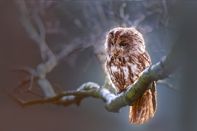 Some sort of owl looking contemplative